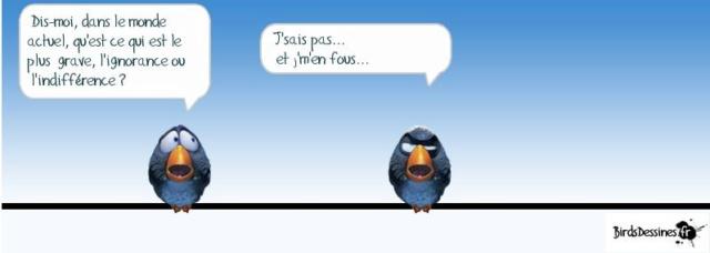 Les birds - Page 15 60356210