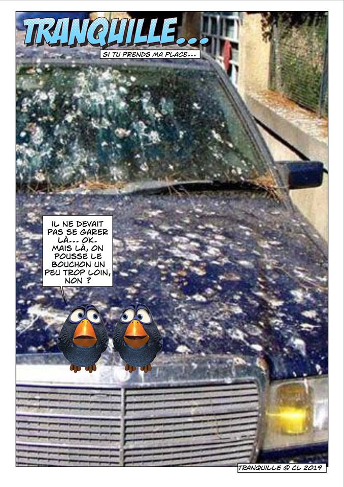 Les birds - Page 12 60479410