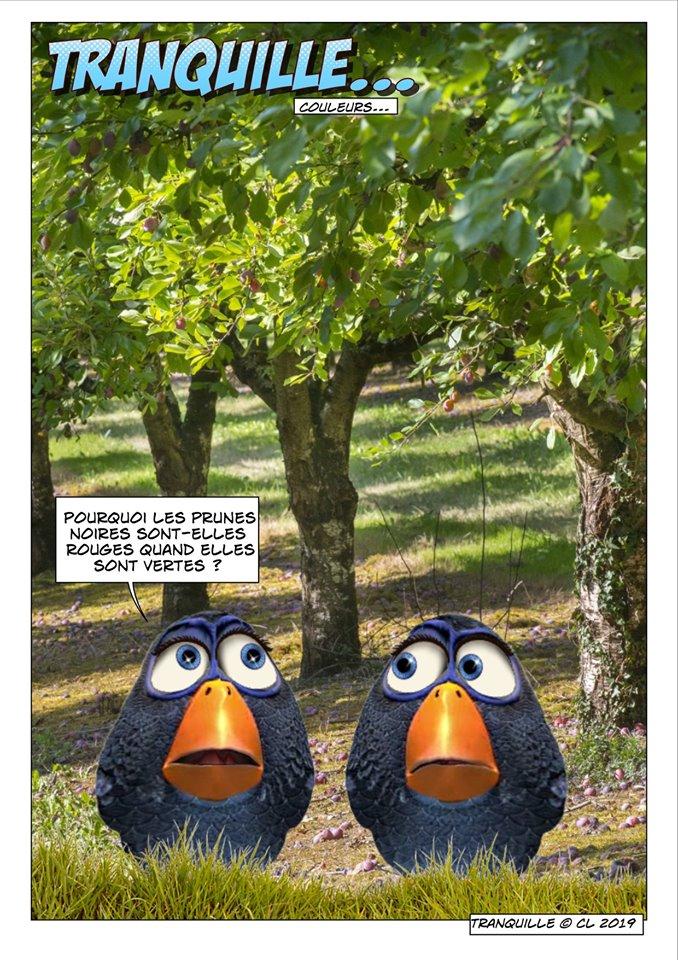 Les birds - Page 13 61139610