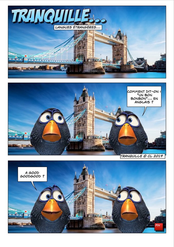 Les birds - Page 13 61406810