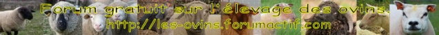 Bannière du Forum - Se faire connaître !!! Bannia10