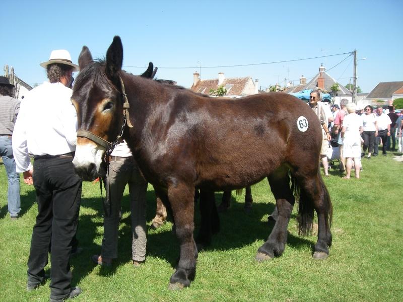 Foire aux ânes et aux mulets LIGNIERES EN BERRY - Lundi de Pentecôte Imgp7711