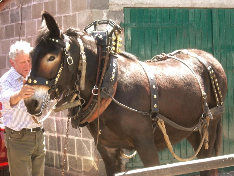 Foire aux ânes et aux mulets LIGNIERES EN BERRY - Lundi de Pentecôte Imgp7712