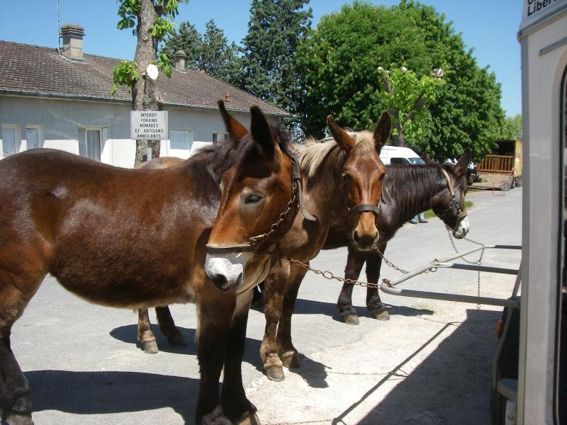 Foire aux ânes et aux mulets LIGNIERES EN BERRY - Lundi de Pentecôte Imgp7713