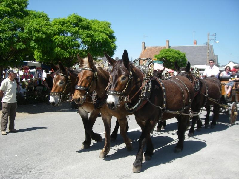 Foire aux ânes et aux mulets LIGNIERES EN BERRY - Lundi de Pentecôte Imgp7715
