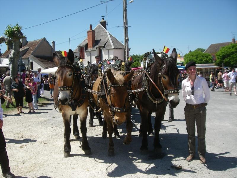 Foire aux ânes et aux mulets LIGNIERES EN BERRY - Lundi de Pentecôte Imgp7716