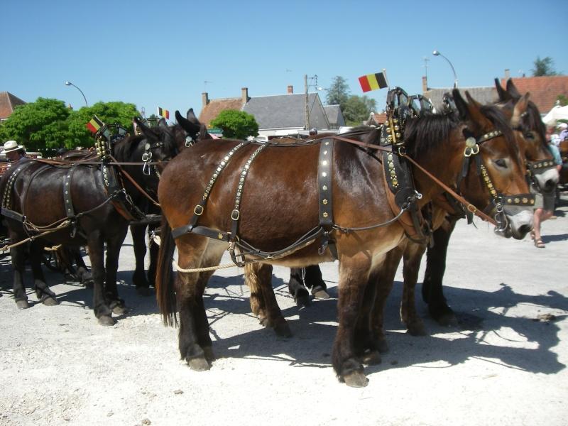 Foire aux ânes et aux mulets LIGNIERES EN BERRY - Lundi de Pentecôte Imgp7717
