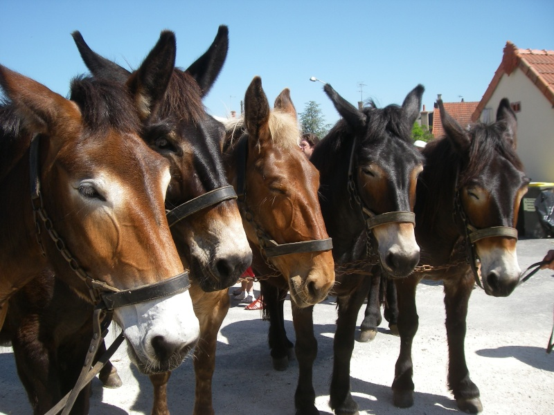 Foire aux ânes et aux mulets LIGNIERES EN BERRY - Lundi de Pentecôte Imgp7718