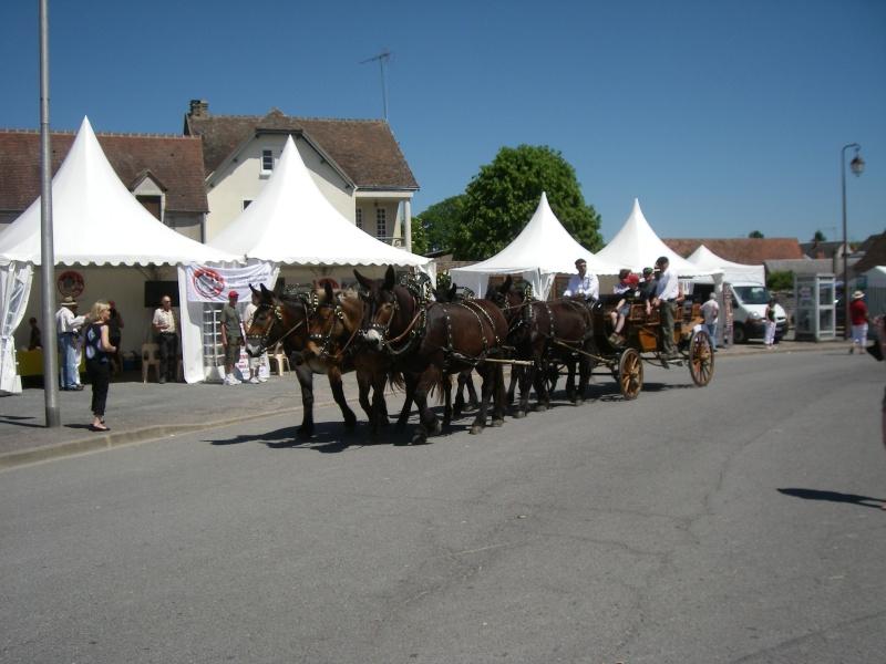 Foire aux ânes et aux mulets LIGNIERES EN BERRY - Lundi de Pentecôte Imgp7719