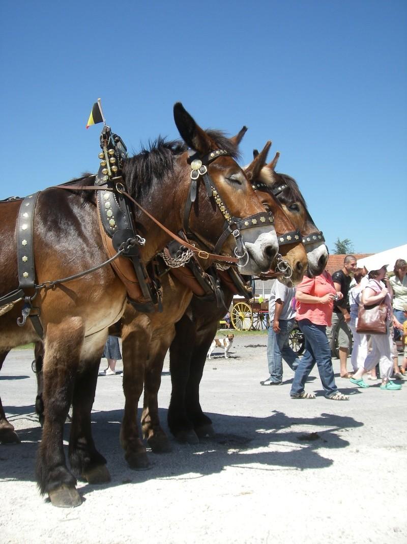 Foire aux ânes et aux mulets LIGNIERES EN BERRY - Lundi de Pentecôte Imgp7720