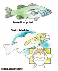 comment percer les poissons P2_bt_10