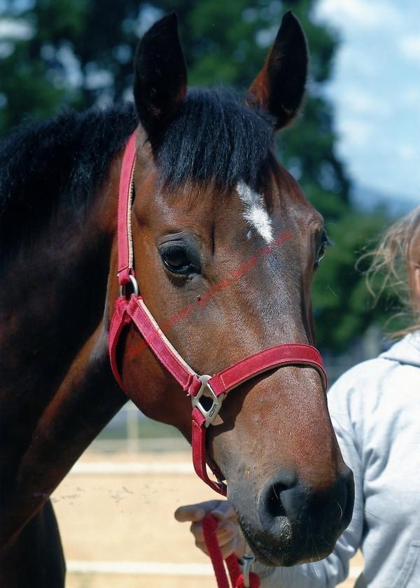 AMADEUS - BWP né en 2000 - adopté en septembre 2011 par Aude Amadeu11