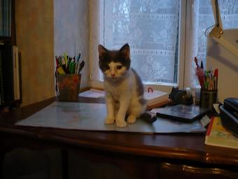 (70) chaton male 2 mois et demi à adopter urgent Booggi10