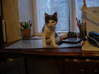 (70) chaton male 2 mois et demi à adopter urgent Booggi11