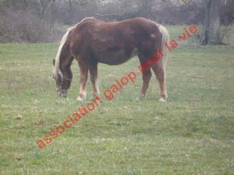 GENTIANE - ONC Poney née en 1979 - Adoptée en mai 2010 par gentianeve Gentia14