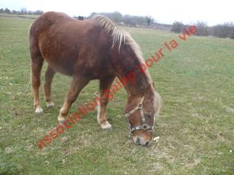 GENTIANE - ONC Poney née en 1979 - Adoptée en mai 2010 par gentianeve Gentia16