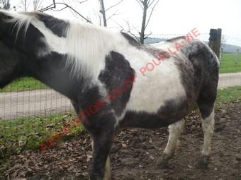 LADY - ONC née en 1987 - adoptée en janvier 2011  par Mélanie Lady_l22