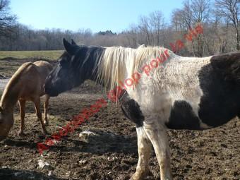 NOMOME - OI demi-trait née en 2006 - Adoptée en avril 2010 par Gisle  Nomome17
