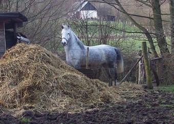 PRINCESSE - ONC poney née en 2003 - aveugle - adoptée en août 2009  Ponett12