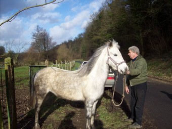 PRINCESSE - ONC poney née en 2003 - aveugle - adoptée en août 2009  Ponett14