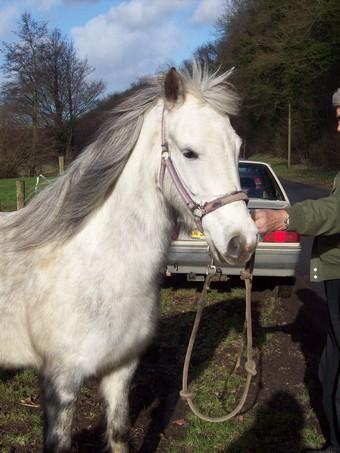 PRINCESSE - ONC poney née en 2003 - aveugle - adoptée en août 2009  Ponett15