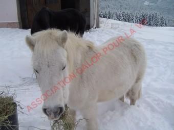 PRISCA - ONC poney typée Shetland née en 1990 - adoptée en septembre 2010 par Delphine - Page 3 Prisca13
