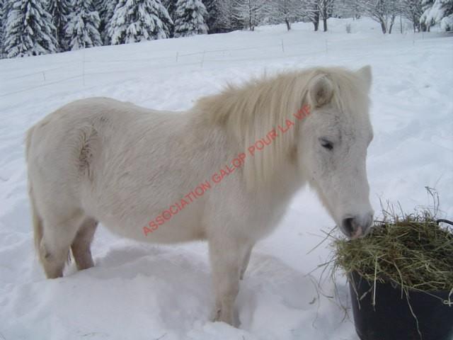PRISCA - ONC poney typée Shetland née en 1990 - adoptée en septembre 2010 par Delphine - Page 3 Prisca14