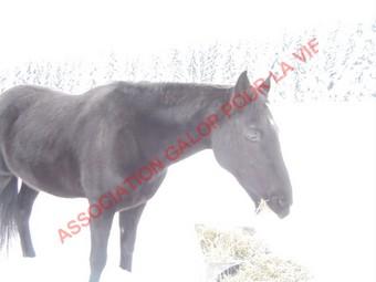 PRISCA - ONC poney typée Shetland née en 1990 - adoptée en septembre 2010 par Delphine - Page 3 Prisca15