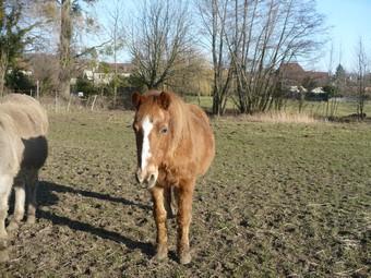 QUETZAL - ONC poney née en 1982 - adoptée en janvier 2011 par Mélanie Quetza13