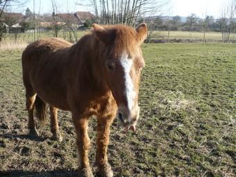 QUETZAL - ONC poney née en 1982 - adoptée en janvier 2011 par Mélanie Quetza15