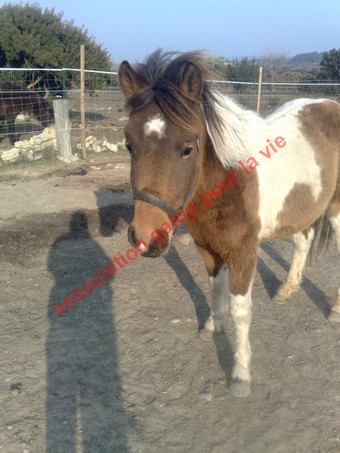 TIPI - ONC poney né en 2008 - adopté en avril 2010 par titan11 Ti_pi_11