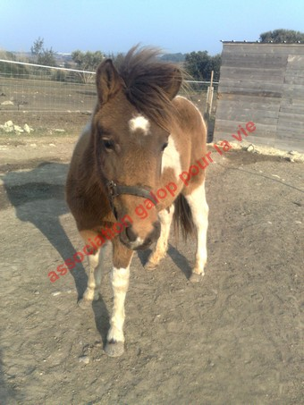 TIPI - ONC poney né en 2008 - adopté en avril 2010 par titan11 Ti_pi_12