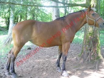 URIELLE - ONC selle X Comtois née en 1986 - adoptée en juillet 2010 par Souris25 Uriell11