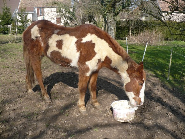 WALANIE (VANILLE) - ONC poney - adoptée en avril 2011 par voulk  - Page 2 Vanill19