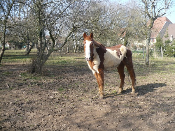 WALANIE (VANILLE) - ONC poney - adoptée en avril 2011 par voulk  - Page 2 Vanill20