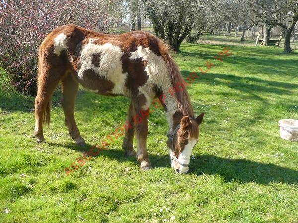 WALANIE (VANILLE) - ONC poney - adoptée en avril 2011 par voulk  - Page 2 Vanill21