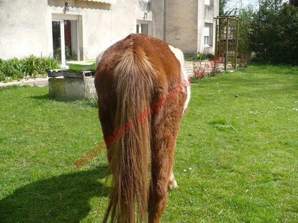 WALANIE (VANILLE) - ONC poney - adoptée en avril 2011 par voulk  - Page 3 Vanill23