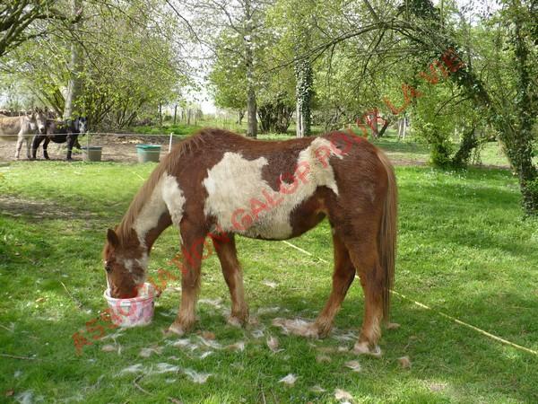 WALANIE (VANILLE) - ONC poney - adoptée en avril 2011 par voulk  - Page 3 Vanill25