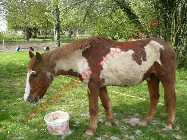 WALANIE (VANILLE) - ONC poney - adoptée en avril 2011 par voulk  - Page 3 Vanill26