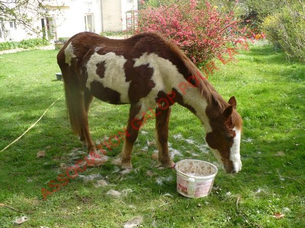 WALANIE (VANILLE) - ONC poney - adoptée en avril 2011 par voulk  - Page 3 Vanill27