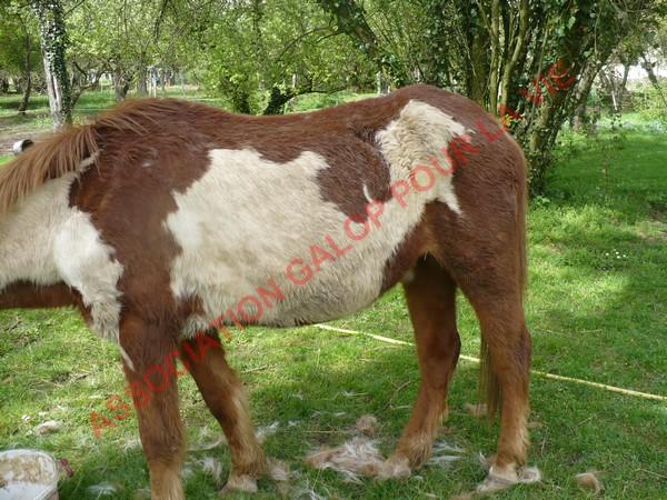 WALANIE (VANILLE) - ONC poney - adoptée en avril 2011 par voulk  - Page 3 Vanill28