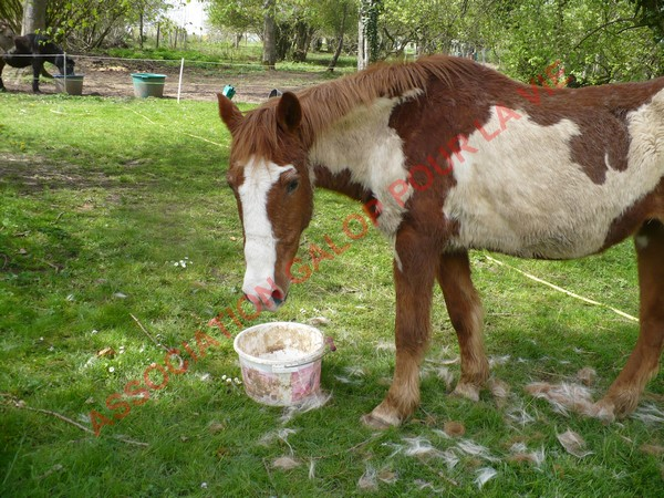 WALANIE (VANILLE) - ONC poney - adoptée en avril 2011 par voulk  - Page 3 Vanill29