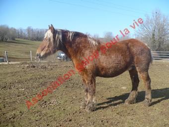 VIOLETTA  - Trait Comtois née en 1987 - adoptée en mai 2010 Violet11