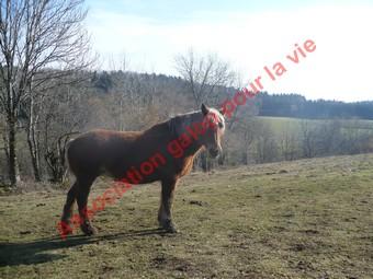 VIOLETTA  - Trait Comtois née en 1987 - adoptée en mai 2010 Violet12