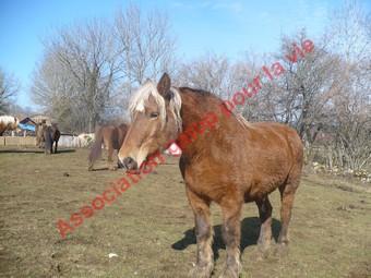 VIOLETTA  - Trait Comtois née en 1987 - adoptée en mai 2010 Violet13