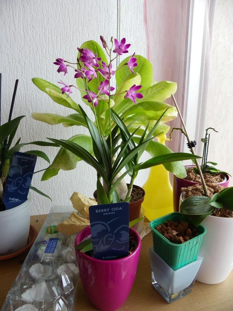 mes orchidées Imgp4412