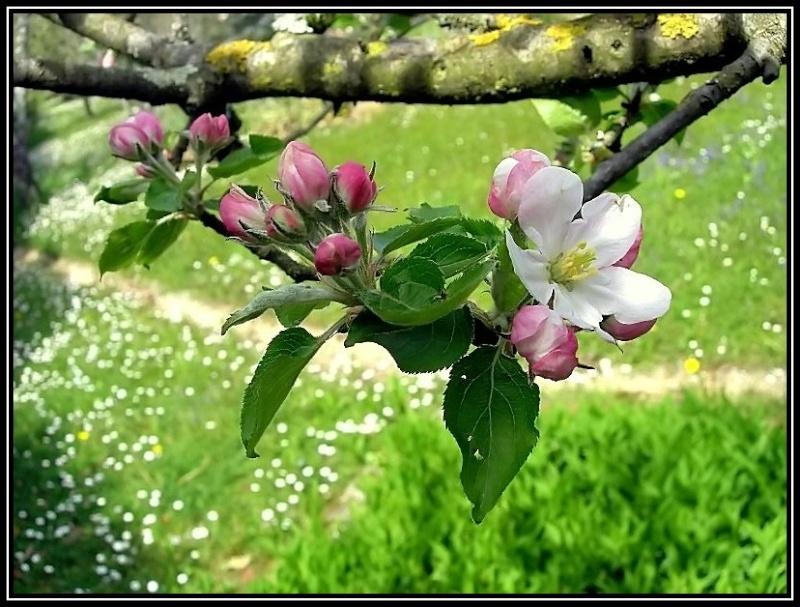 Travail sur une photo de fleur Fleur_10
