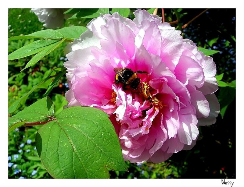 Travail sur une photo de fleur Fleurs10