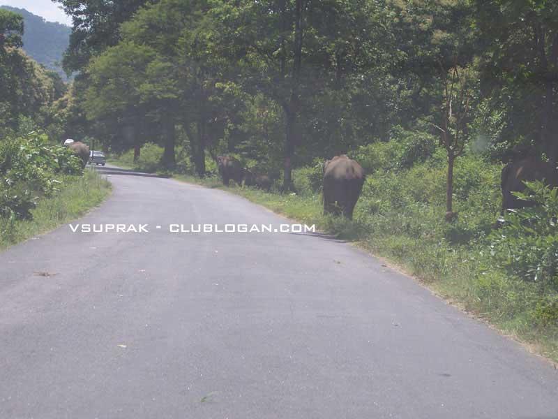 May 2010  ::  Bangalore --> Kodaikanal --> Ooty --> Bangalore 1510
