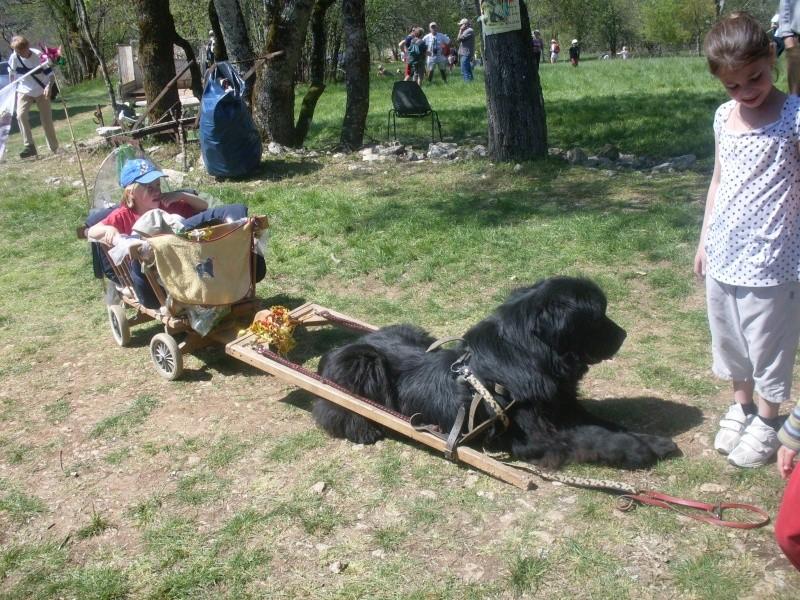 Ugo mon terre neuve en charrette ...... Sdc14200